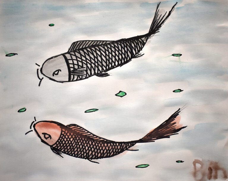 Two fish feed at the surface of the water