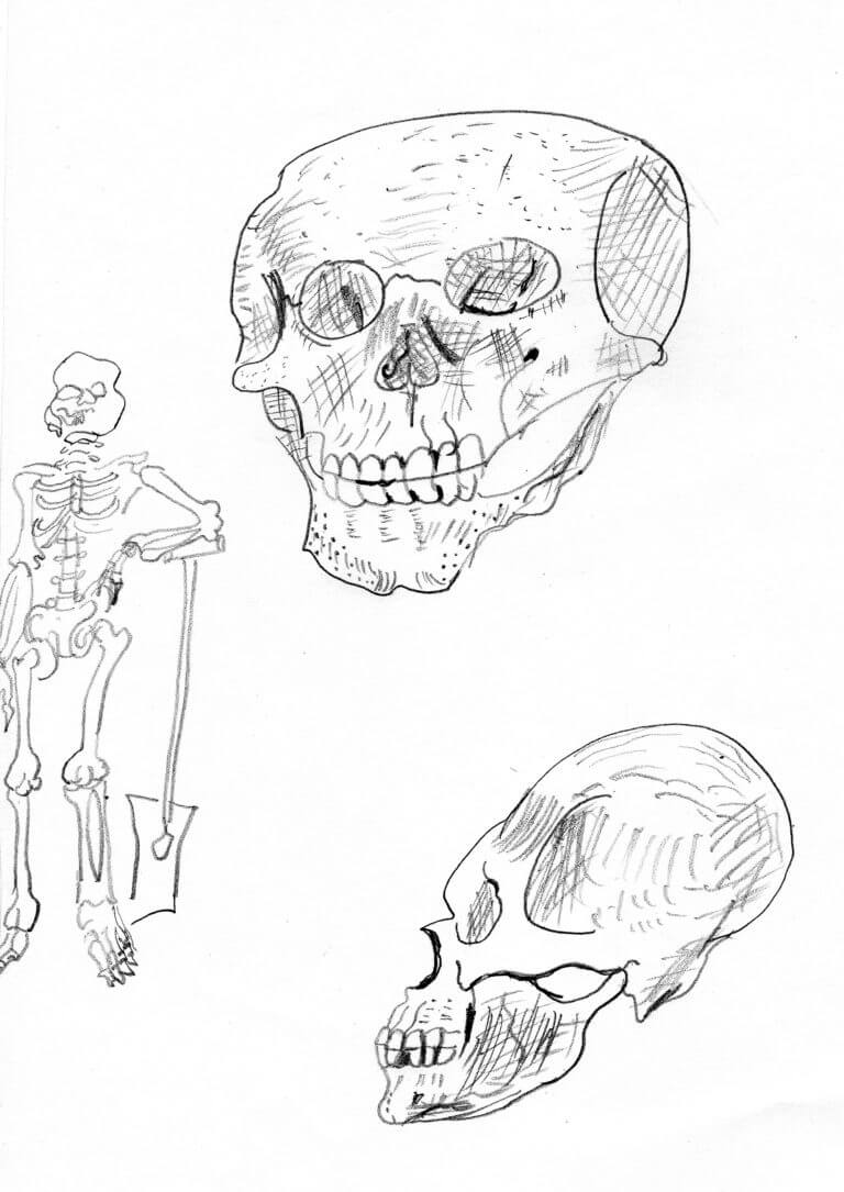 A pencil drawing of a human skull and skeleton